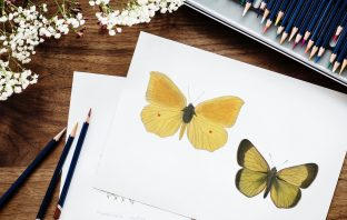 Yellow Butterfly Graphic for Sublimation